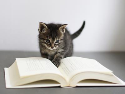2020年日文暑期密集班│7/15開課 超好評招生中!